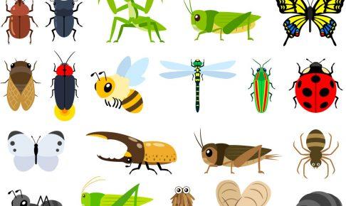 Insect Collectionは香川さんが設立したブランド