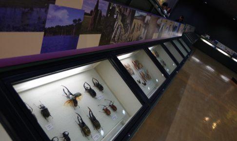 橿原市昆虫館の画像
